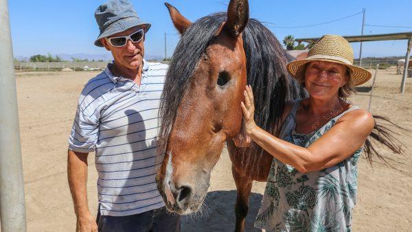 Una década en el santuario equino de Rojales