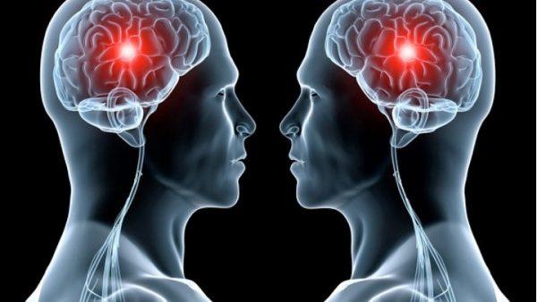 Diez secretos del cerebro descubiertos en la UMH